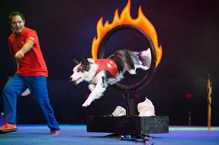 The Stunt Dog Experience